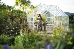 Odla det säsongsbetonade tillväxtbegreppet för den trädgårds- naturen Royaltyfria Foton