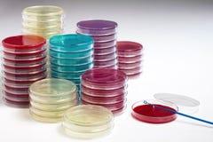 Odla petri disk i labbet Fotografering för Bildbyråer