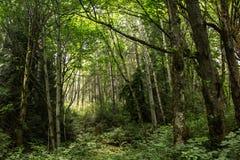 odległy światło przez polany w lesie fotografia royalty free