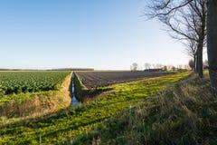 Odling av Bryssel groddar och ett plogat fält Royaltyfri Foto