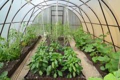 Odling av grönsaker i växthuset från den cell- polycarbonaten royaltyfri foto