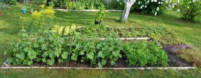 Odling av grönsaker och kryddor royaltyfria bilder