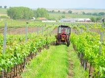 Odling av vingården Royaltyfria Bilder