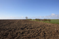 odlingsbara fält Arkivfoto