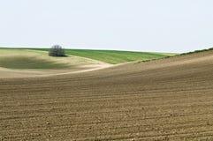 Odlingslandskap med busken Arkivfoton
