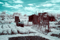 Odlingslott i Infrared Fotografering för Bildbyråer