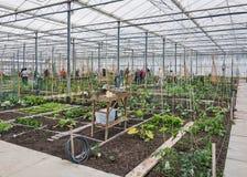 Odlingslottar i ett växthus Arkivbilder