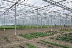 Odlingslottar i ett växthus Royaltyfri Foto