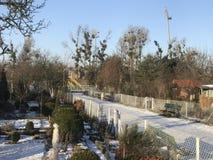 Odlingslottar i snöig vinter Arkivfoton