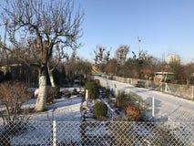 Odlingslottar i snöig vinter Arkivbilder