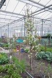 Odlingslottar med grönsaker och fruktträd i ett växthus Arkivbilder