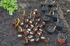 Odlingslottar med plantakrukor i ett växthus Arkivbilder