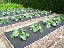 odlingslottgrönsaker Arkivbilder