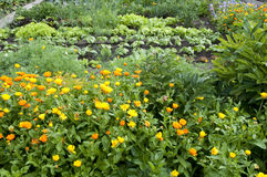 odlingslottunderlagträdgård Royaltyfri Bild