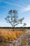 Odludni drzewa w Holenderskim rezerwat przyrody w jesień Zdjęcia Stock
