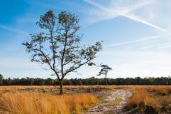 Odludni drzewa w Holenderskim rezerwat przyrody w jesień Obrazy Stock