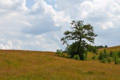 Odludny Dębowy drzewo Fotografia Stock