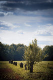 odludny drzewo fotografia stock