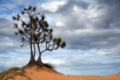 odludny drzewo Obrazy Royalty Free