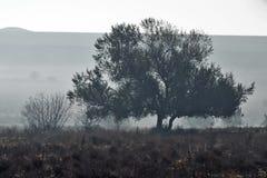 Odludny drzewo na gazonie Obraz Royalty Free