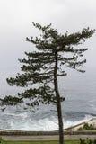 Odludny drzewo naprzeciw morza Zdjęcie Stock