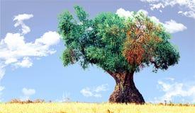 odludny drzewo oliwne zdjęcie stock