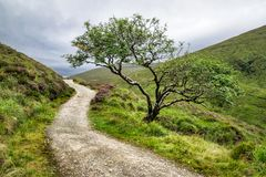 Odludny drzewo w górach zdjęcie stock