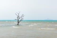 Odludny drzewo w morzu Zdjęcia Stock