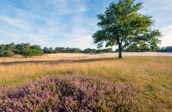 Odludny drzewo w rezerwacie przyrody w holandiach Fotografia Stock