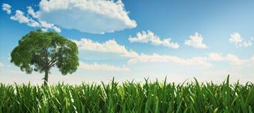 Odludny drzewo w trawy polu. Zdjęcie Royalty Free