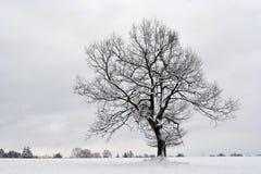 Odludny drzewo w zimie Obrazy Stock