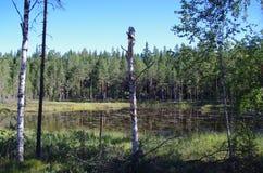 Odludny jezioro w Dalarna obraz stock