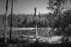 Odludny jezioro w Dalarna obrazy royalty free