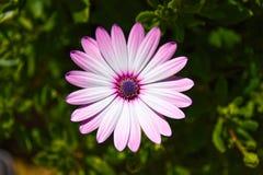 Odludny kwiat fotografia stock