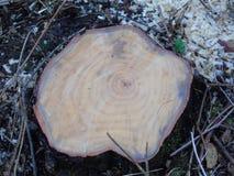 Odludny liść r od ostatnio ciącego puszka drzewa obraz royalty free