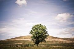 Odludny zielony drzewo w pocisku dziki pole Zdjęcia Royalty Free