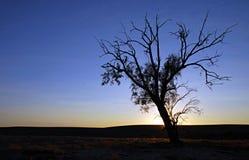 Odludzia drzewo Fotografia Stock