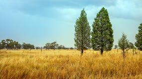 Odludzie przy Dubbo Australia Obraz Royalty Free