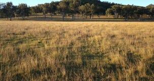 Odludzie rolniczy i uprawia ziemię pole zbiory wideo