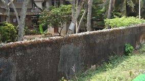 Odnawiąca ściana, fort Kochi, India, Kerala zbiory wideo