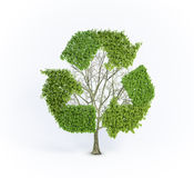 odnawialny drzewo Obraz Stock