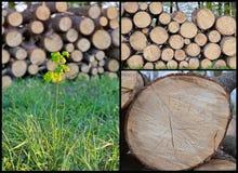 odnowienie lasów fotografia stock