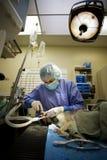 Odontología veterinaria Fotografía de archivo libre de regalías