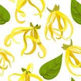 Odorata Cananga цветка иланг-иланга тропический вектор картины безшовный Стоковое Изображение RF