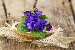 Odorata de la viola - la primavera florece el ramo fotos de archivo libres de regalías