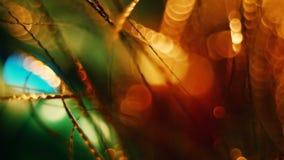 Odore dell'abete di Natale stock footage