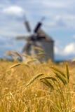 Oídos del trigo y del molino de viento Fotografía de archivo