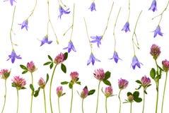 Odosobneni łąka kwiaty Fotografia Stock