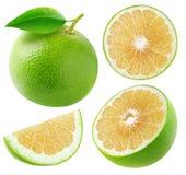 Odosobneni biali grapefruits inkasowi zdjęcie royalty free