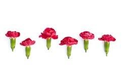 Odosobneni czerwoni łąka kwiaty Obrazy Stock